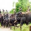 Patroli Gajah Di Taman Nasional Tesso Nilo