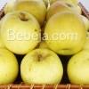 Apel Manalagi Ikon Malang