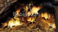 Botia Primadona Ekspor Ikan Hias