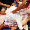 Pemeriksaan Hewan Dan Daging Qurban
