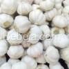 Bawang Putih Honan Asal Tiongkok