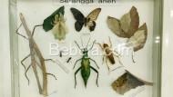 Aneka Serangga Unik Dan Aneh