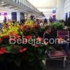 Go Green Taman Di Bandara