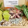 Hadiah Spesial Miniature Garden