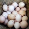 Syarat Telur Organik