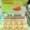 Khasiat Telur Omega