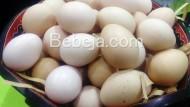 Ini Telur Ayam KUB