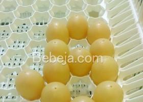 Wadah Telur Rumah Lebah