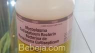 Manfaat Vaksin MG-Bac