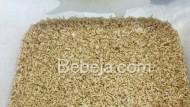 Tahap Tumbuh Maggot (1)