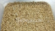 Tahap Tumbuh Maggot (2)