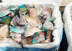 Lindungi Ikan Kakatua