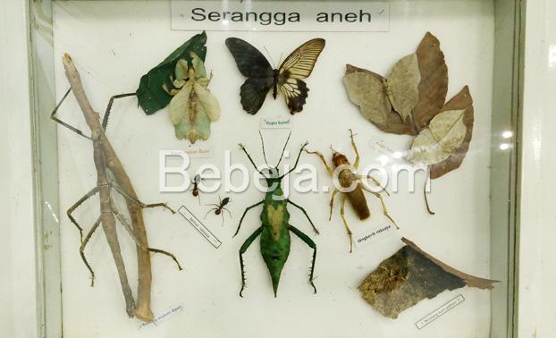 aneka-serangga-unik