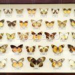 Rumah Tinggal 2.000 Spesies Kupu-kupu