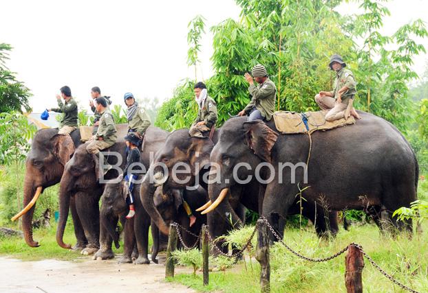 patroli-gajah-di-taman-nasional-tesso-nilo
