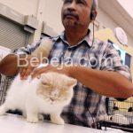 Penjurian Kontes Kucing