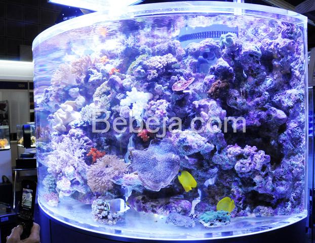 akuarium-laut