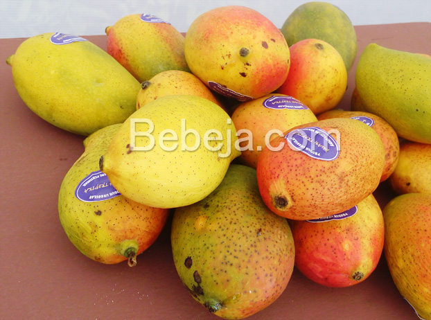 mangga-agri-gardina-45
