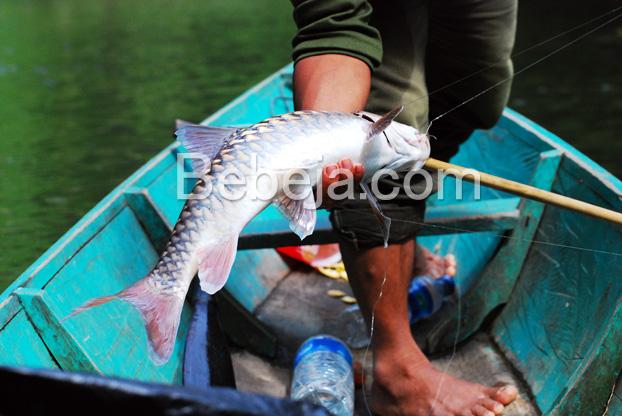 memancing-ikan-jelawat