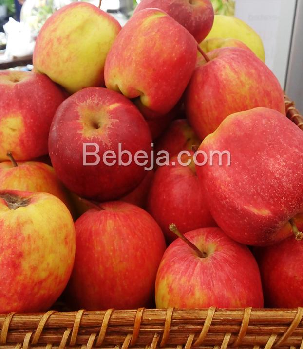 apel-varietas-anna