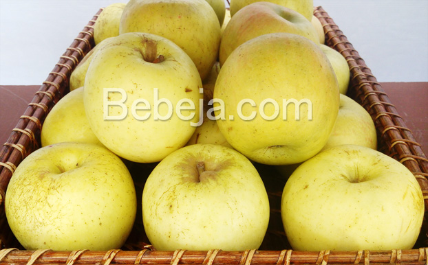 apel-varietas-manalagi