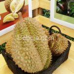 Durian Monthong Rasa Lokal