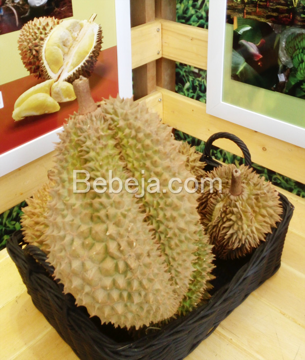 durian-monthong-lokal