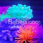 Koral Neon Artifisial