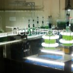 Kultur Alga Untuk Biodiesel