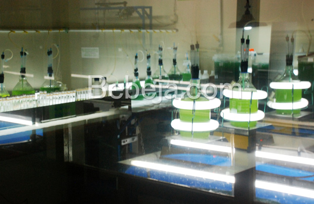ruang-kultur-bioalga-untuk-bioenergi