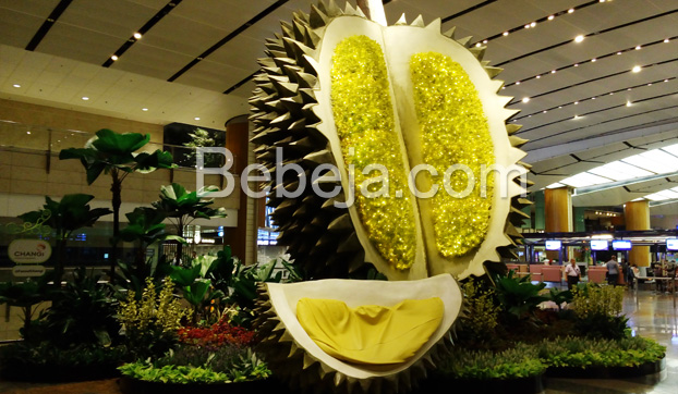 taman-durian-di-bandara-changi