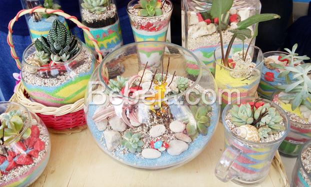 terarium-tanaman-indoor
