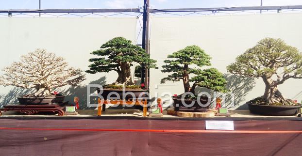 gebyar-bonsai-bandung-juara-2016
