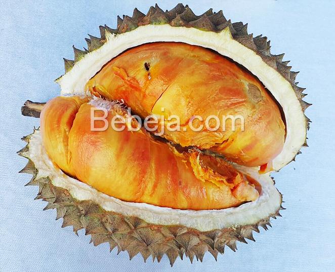 durian-merah-banyuwangi