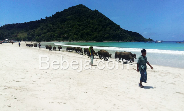 pantai-selong-belanak-lombok