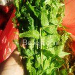 Peluang Bisnis Pakis Sayur