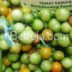 Tomat Rampai Mandalawangi Pandeglang