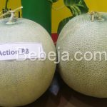 Pekebun Suka Melon Action 88