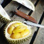 Pisau Kupas Durian