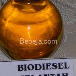 Potensi Biodiesel Jelantah